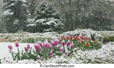 On the flower clearing in the park it's snowing - In the...
