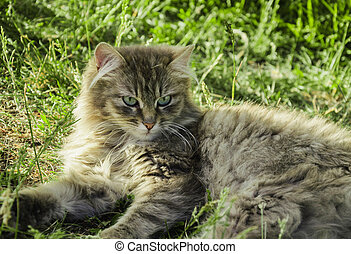 On the grass is a gray cat