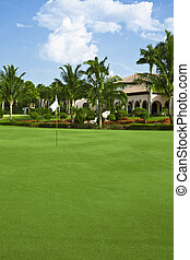 On The Green - A green on a golf course with palm trees and...