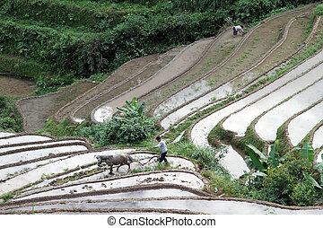 On the rice field