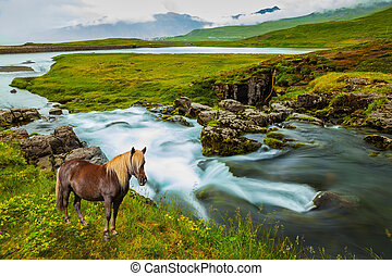 On the shore of waterfall horse grazing