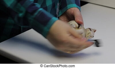 On the table is a piggy bank in the form of a cat. A man takes a piggy bank, opens it. He pours out coins from the piggy bank in his palm and puts it on the table.