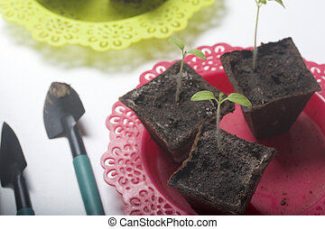 On the table is a seedling in peat containers. Also, a pot of soil to which transplants need to be transplanted, and tools for tillage.