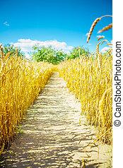 on wheat field