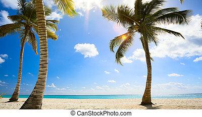 onaangeroerd, kunst, tropische , zee, caribisch strand