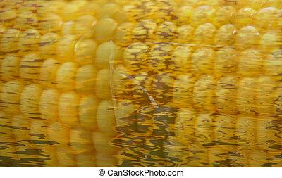 onbedekt, cornbob, textuur, vezels
