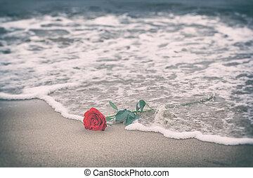 ondas, lavagem afastado, um, rosa vermelha, de, a, praia.,...