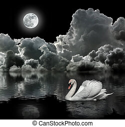 onder, witte zwaan, maan, nacht