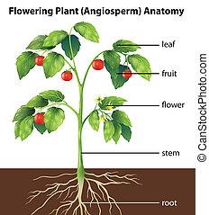 onderdelen, van, een, plant
