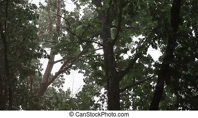 onderdrukking, storm, bomen