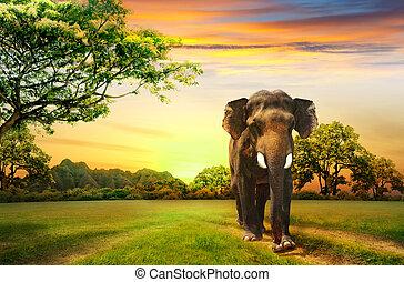ondergaande zon , elefant