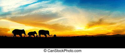 ondergaande zon , gezin, elephants.