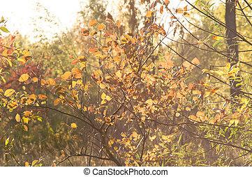 ondergaande zon , in, de, herfst bos