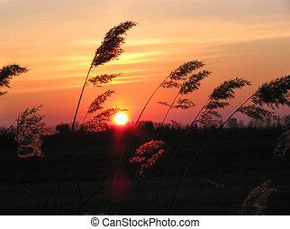 ondergaande zon , in, een, prairie