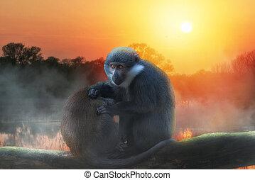 ondergaande zon , l'hoest's, boompje, aap, twee