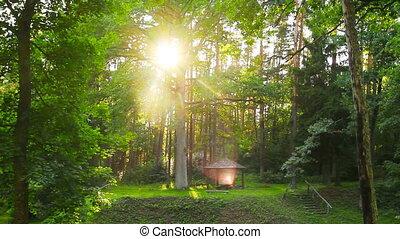 ondergaande zon , magisch, bos
