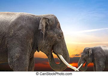 ondergaande zon , olifanten