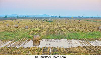 ondergaande zon , op, boer veld, met, hay balen