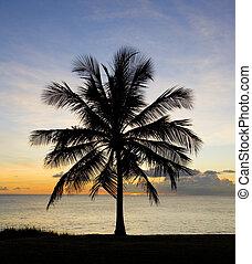 ondergaande zon , op, de caraïben, barbados, zee
