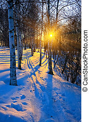ondergaande zon , park, winter