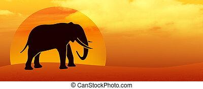 ondergaande zon , silhouette, woestijn, elefant