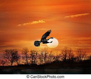 ondergaande zon , vogel