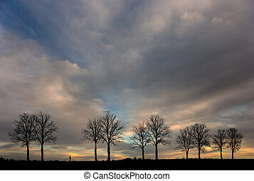 ondergaande zon , wandelende, silhouette, man
