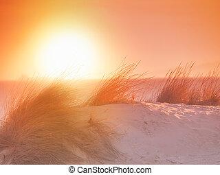 ondergaande zon , zand strand, beachgrass