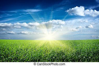 ondergaande zon , zon, en, akker, van, groene, fris, gras, onder, blauwe hemel
