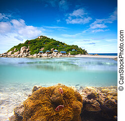 onderwater, shoot., eiland, -, koraal, palm, helft, clownfish