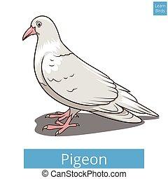 onderwijs, duif, spel, vector, leren, vogels