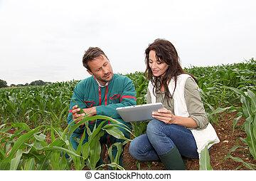 onderzoeker, plant, analyzing, koren, farmer
