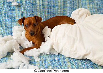 ondeugende , na, dog, speels, het bijten, puppy, hoofdkussen