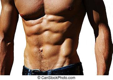 ondulación, macho, torso
