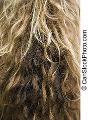 ondulado, longo, hair.