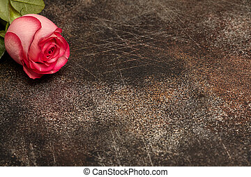 One beautiful pink rose on brown background