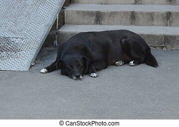 one big black dog lies on the gray asphalt at the steps