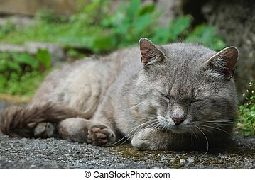 one big gray cat lies on the pavement