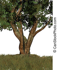 One Big Tree - One big tree on a white background