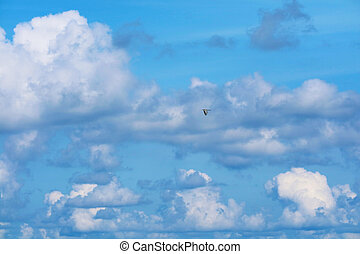 one bird fly on clear blue sky heap white cloud on ocean - ...