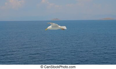Bird among the sea. Wild bird flying high. Seagull above blue sea. Travel concept. Freedom idea. Wild animal living in natural environment. Save our planet. Flying bird on calm seascape skyscape