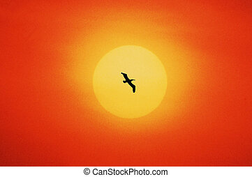 one bird flying in sundown