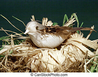 One bird in nest, close up view