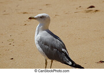 One bird on the beach