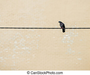 one bird sitting on the cable