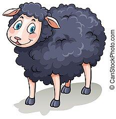 One black sheep - One cute black sheep on a white background