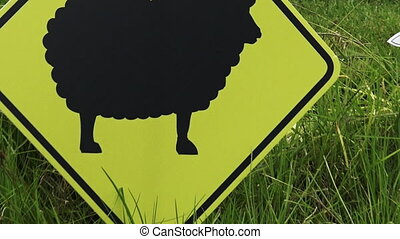 One black sheep - The Black sheep in the flock. Social...