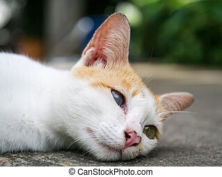 One blind cat lying on the ground