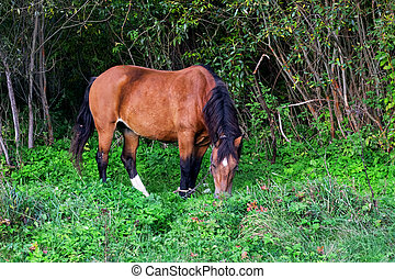 One brown horse in a green summer forest