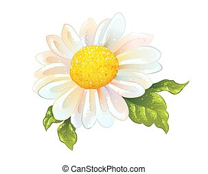 One chamomile flower isolated. Sunny sketch of white daisy